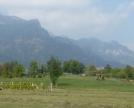 campi coltivati -monti