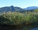 vegetazione lacustre