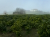 panoramacostamasnaga6_1500