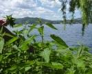 ortiche-in-riva-al-lago