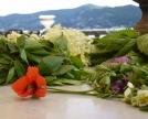 erbe-e-fiori