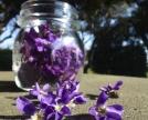 vaso-violette