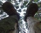 lo-spirito-del-bosco