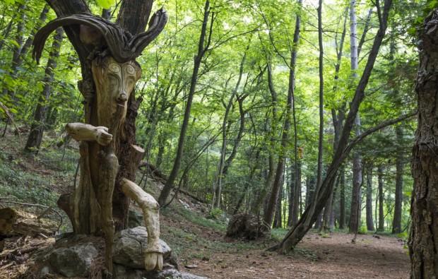 Lo spirito del bosco le immagini exploratori della for Planimetrie di 1500 piedi quadrati
