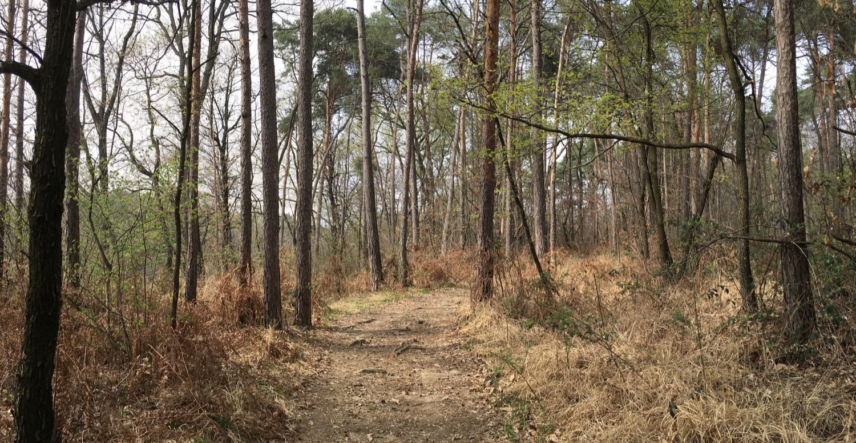 PanoramaBrughiera_1500